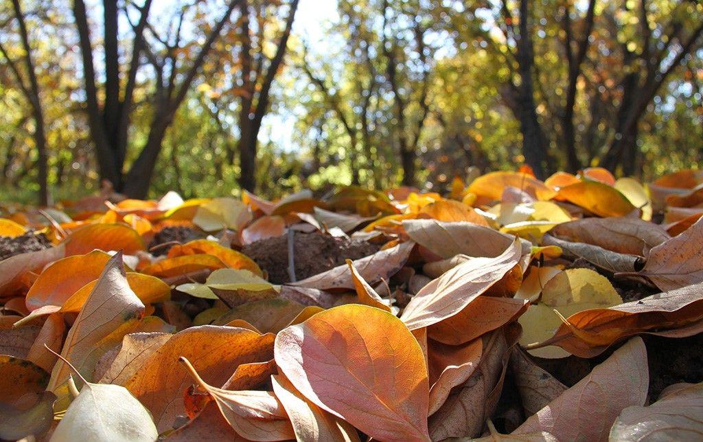 نگهداری از باغ در فصل پاییز