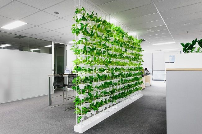 طراحی دیوار سبز